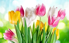 Preview wallpaper Pink white yellow tulips, sunshine, glare