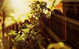 Растения, ветви, листья, забор, свет, размыто