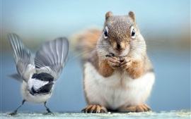 Preview wallpaper Squirrel and bird photography