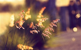 Preview wallpaper Summer grass at sunset, blurry background