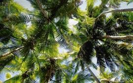 Aperçu fond d'écran Palmiers tropicaux