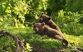 Two bear cubs playful in grass
