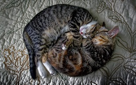 Two cats falling asleep