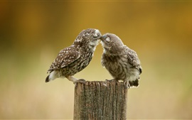 Preview wallpaper Two cute little owls, stump