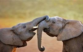 Two elephants playful