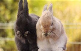 Two rabbits, brown and black