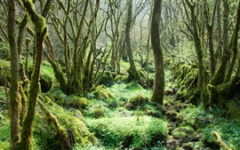 Virgin forest, trees, moss