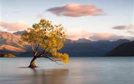 Preview wallpaper Wanaka, New Zealand, Otago, lake, one tree in water