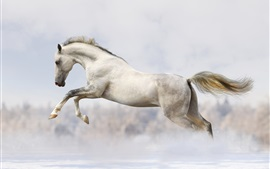 White horse running in winter