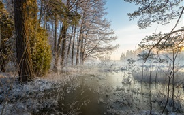 Preview wallpaper Winter, forest, river, trees, snow, frost