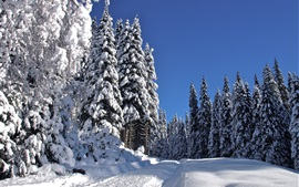 Winter, white snow, cold, forest, trees