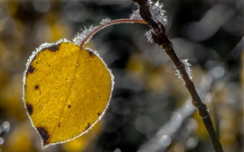 Preview wallpaper Yellow leaf, frost, ice crystals, autumn