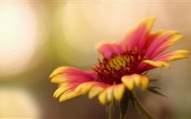 Желтый красный лепестки цветка макросъемки