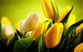 Preview wallpaper Yellow tulips flowers, green background