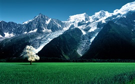 Preview wallpaper Alps, Bossons Glacier, grass, trees, green field