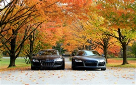 Preview wallpaper Audi R8 V10 cars front view, autumn, trees