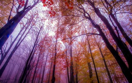 Preview wallpaper Autumn, forest, trees, fog, red leaves