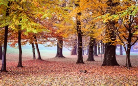Preview wallpaper Beautiful autumn park, trees, yellow foliage