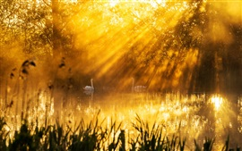 Preview wallpaper Beautiful morning sun rays, lake, swans, trees