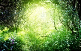 Preview wallpaper Beautiful nature, grass, trees, bushes, green, sunshine