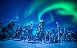 Beautiful northern lights, winter, snow, spruce, trees, night