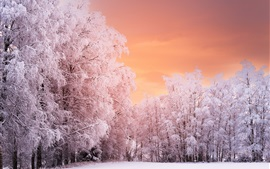 Preview wallpaper Beautiful winter, trees, snow, red sky