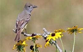 Птица и желтые цветы