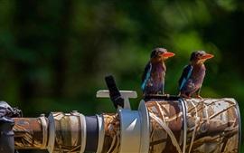 Pássaros, ficar, câmera, lente