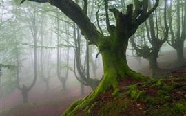 Бискайский, Испания, деревья, мох, туман, весна