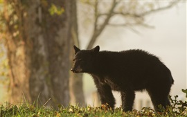 Preview wallpaper Black bear in grass