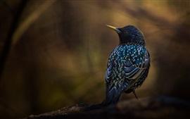 Preview wallpaper Black feather bird