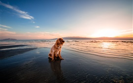 Brown dog sitting at sunset seashore