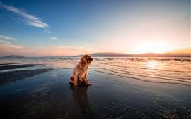 Cão, sentando, pôr do sol, litoral