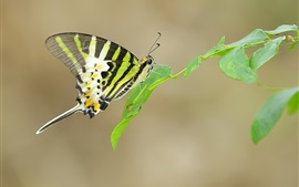 Butterfly in nature, wings, leaves
