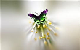 Borboleta, asas, flor, pistilo