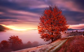Preview wallpaper Carpathians, Ukraine, dawn, fog, mountains, trees, red leaves, autumn