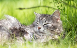 Preview wallpaper Cat sleep in weed