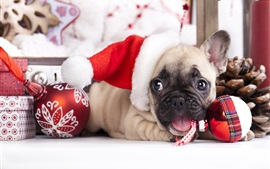 Preview wallpaper Christmas dog, hat, balls, French bulldog