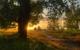 Preview wallpaper Countryside, Lower Saxony, Germany, trees, road, grass, sunset