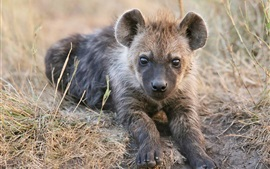 Preview wallpaper Cute hyena cub