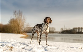 Preview wallpaper Dog at lakeside, snow, winter