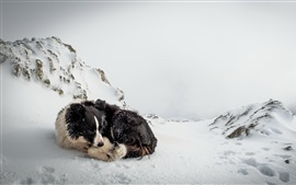 Preview wallpaper Dog rest in winter snow