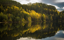 Forest, lake, water reflection, autumn