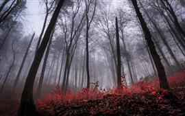 Bosque, árboles, niebla, amanecer, otoño