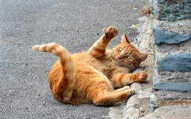 Funny orange cat, playful with it self