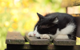 Preview wallpaper Furry cat sleeping on bench