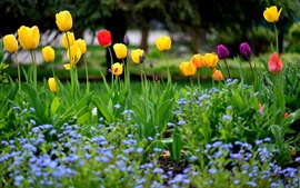 Preview wallpaper Garden flowers, spring, tulips, yellow red purple