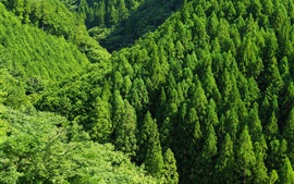 Green forest, trees, top view