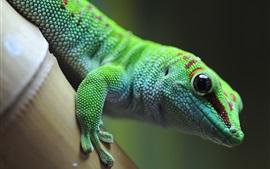 Зеленая ящерица, геккон, животное фотографии