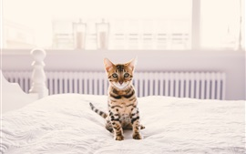 Preview wallpaper Home pet, kitten on bed